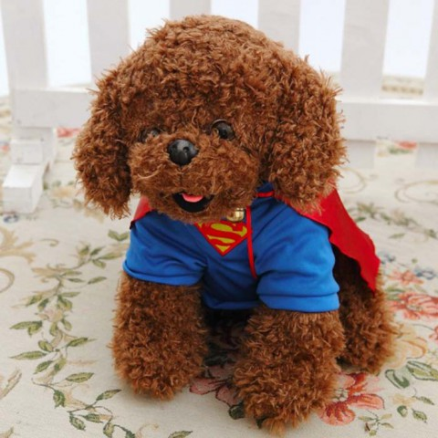 Chó bông lông xù Poodle siêu nhân