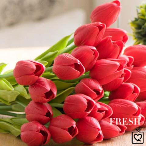 Hoa Tulip Pu