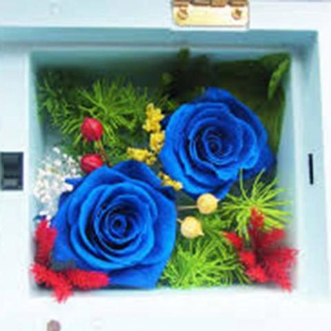 Hoa hồng bất tử - Hộp nhạc