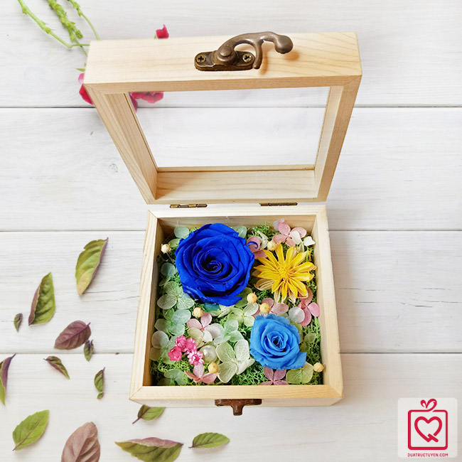 hoa hồng bất tử hộp gỗ vuông hồng xanh