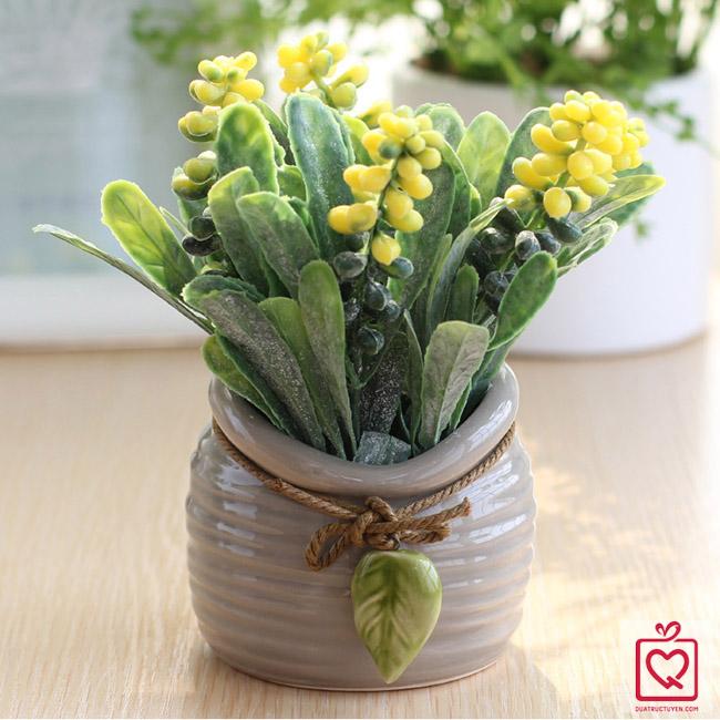Chậu hoa để bàn hoa trân châu